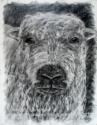Sheep Animal Drawing Charcoal Grey-facedDartmoor