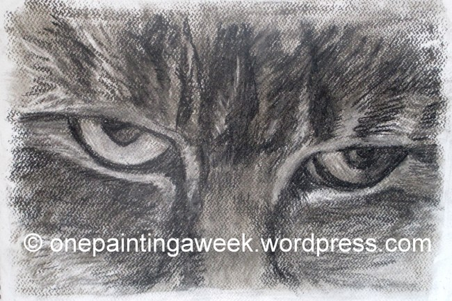 Cat Animal Drawing Charcoal eyes face onepaintingaweek