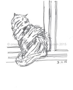 Cat at window-001