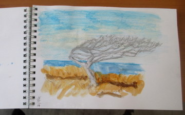 Windswept Tree - Sketchbook Drawing