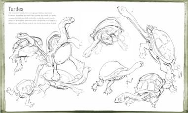 Sarah Simblet from The Drawing Book