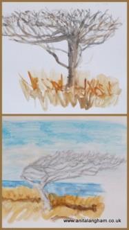 Windy Trees Cornish Coast Watercolour Drawings