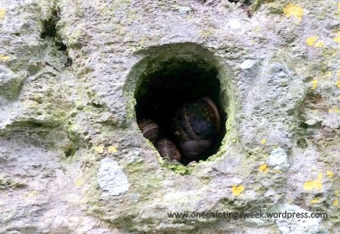 hole in wall with snails photo