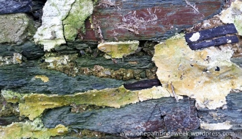 wall lichen colours noticing_small_things
