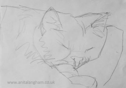 Sleeping cat drawing on paper