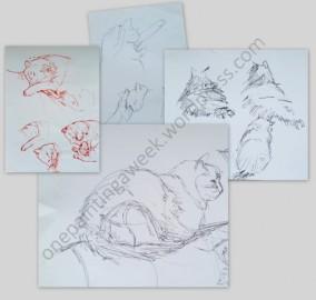 Cat drawings by Anita Langham
